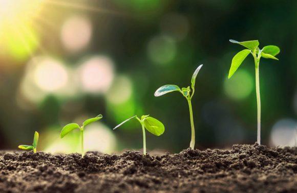 Metodología GROW: Coaching para alcanzar objetivos personales